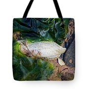 Common Piddock - Pholas Dactylus Tote Bag
