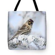 Common Redpoll - Hello Tote Bag