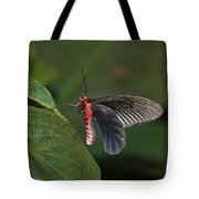 Common Rose Butterfly Tote Bag