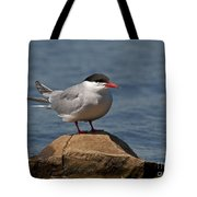 Common Tern... Tote Bag by Nina Stavlund