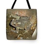Common Toad - Bufo Americanus Tote Bag