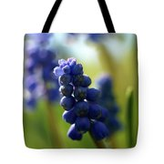 Compact Grape-hyacinth 2 Tote Bag