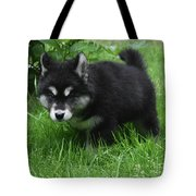 Concern Expressed On The Face Of An Alusky Pup Tote Bag