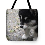 Concern On The Face Of An Alusky Puppy Tote Bag