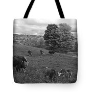 Congregating Cows. Jenne Farm Cow Reading Vermont Black And White Tote Bag