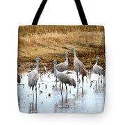 Congregating Sandhill Cranes Tote Bag