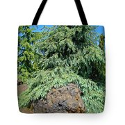 Conifer Tree Art Prints Pine Trees Botanical Nature Baslee Troutman Tote Bag