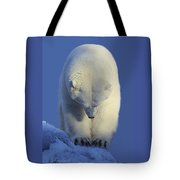 Contemplation Polar Bear Tote Bag