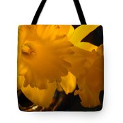 Contemporary Flower Artwork 10 Daffodil Flowers Evening Glow Tote Bag