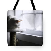 Content Cat Tote Bag