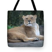 Contented Lioness Tote Bag