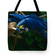 Contorted Parrots Tote Bag