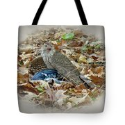 Cooper's Hawk - Accipiter Cooperii - With Blue Jay Tote Bag