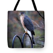 Coopers Hawk In Autumn Tote Bag