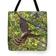 Cooper's Hawk In Early Morning Light Tote Bag