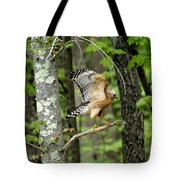 Coopers Hawk In New Hampshire Tote Bag