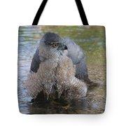 Cooper's Hawk In Stream Tote Bag