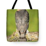 Cooper's Hawk In The Backyard Tote Bag