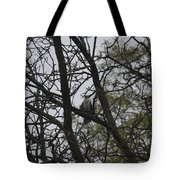 Cooper's Hawk Perched In Tree Tote Bag