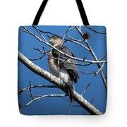 Cooper's Hawk Tote Bag