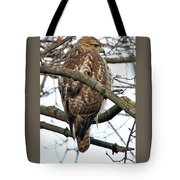Coopers Hawk Winter Tote Bag