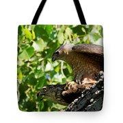Cooper's Hawks Mating Tote Bag