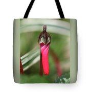 Coquettish Cyclamen Tote Bag