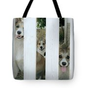 Corgis Three Tote Bag