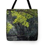 Corkscrew Swamp - In The Autumn Tote Bag