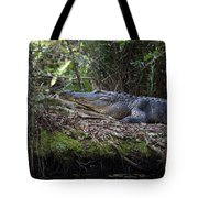 Corkscrew Swamp - Really Big Alligator Tote Bag