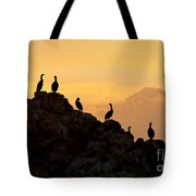 Cormorants On A Rock With Golden Sunset Sky Tote Bag
