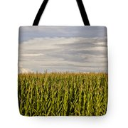 Corn Field In Sunset Tote Bag