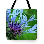 Cornflower Centaurea Montana Tote Bag