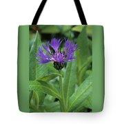 Cornflower Purple Surprise V1 Tote Bag