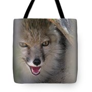 Corsac Fox- Vulpes Corsac 01 Tote Bag