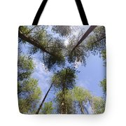 Corsican Pine Canopy Tote Bag