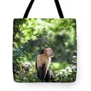 Costa Rica Capuchin Monkey Tote Bag