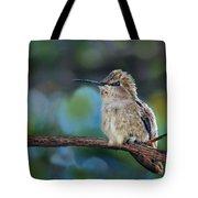 Costa's Hummingbird - Square Tote Bag