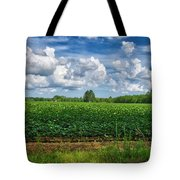 Cotton Fields Of Sc Tote Bag
