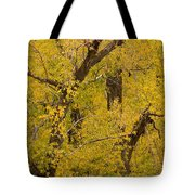 Cottonwood Fall Foliage Colors Tote Bag
