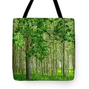 Cottonwood Grove Tote Bag by Will Borden