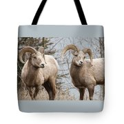 Couple Of Rams- Banff National Park Tote Bag