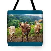 Cow Gazing  Tote Bag