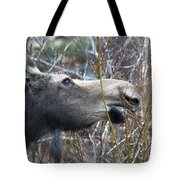 Cow Moose Dining On Willow Tote Bag