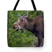 Cow Moose-signed-#4016 Tote Bag
