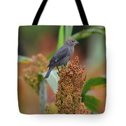 Cowbird Feasting On Milo And Shiloh Military Park In Tennessee Tote Bag