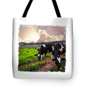 Cows At Sunset Bordered Tote Bag