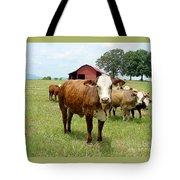 Cows8944 Tote Bag