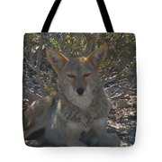 Coyote 2 Tote Bag