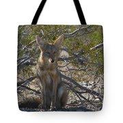 Coyote 3 Tote Bag